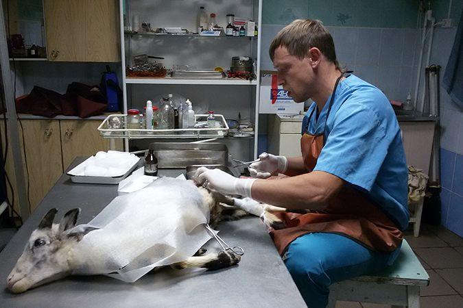 одежды защищать цены в ветеринарных клиниках в нижнем новгороде термобелье создавалось