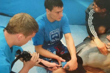 Гастрофиброскопия желудка дельфина